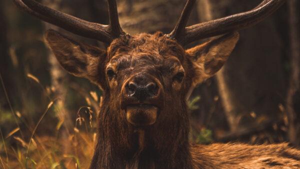 lightroom fall preset elk aspens in autumn by runngun photography