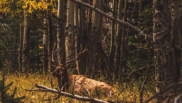 lightroom fall preset aspens in autumn by runngun photography elk