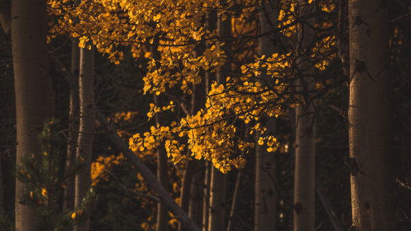 lightroom fall preset aspens in autumn by runngun photography