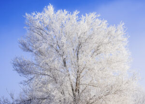 10 Winter Photography Tips and Tricks RunNGun Photo Example 7